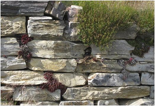 Jurakalk Mauerplatten verlegt mit Steinpflanzen